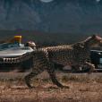 Vidéo : un guépard défie la Formula E de Jean-Eric Vergne