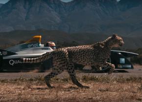 video-formula-e-cheetah-drah-race