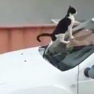 Dacia Duster : un chat prend le SUV pour une litière (vidéo)