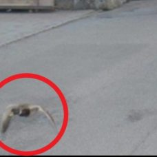 Suisse : un canard flashé à 52 km/h