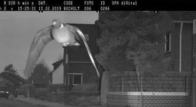 excès de vitesse d'un pigeon en Allemagne