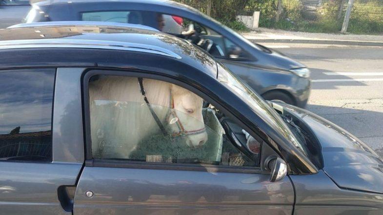 voiture sans permis